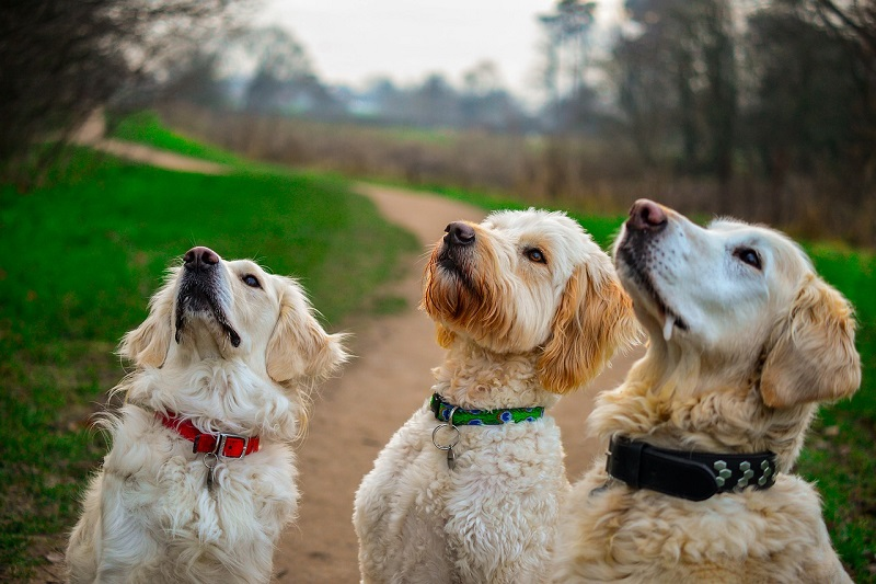 Foods to Avoid giving Dogs
