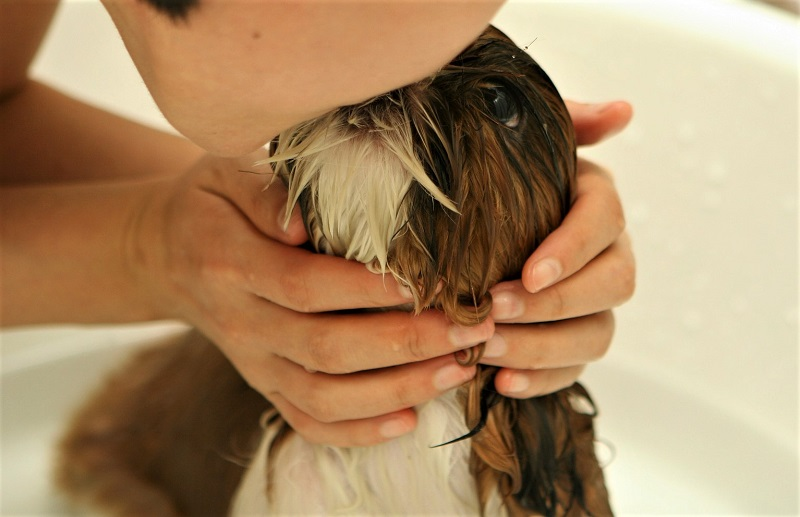 Best Dog Shampoos