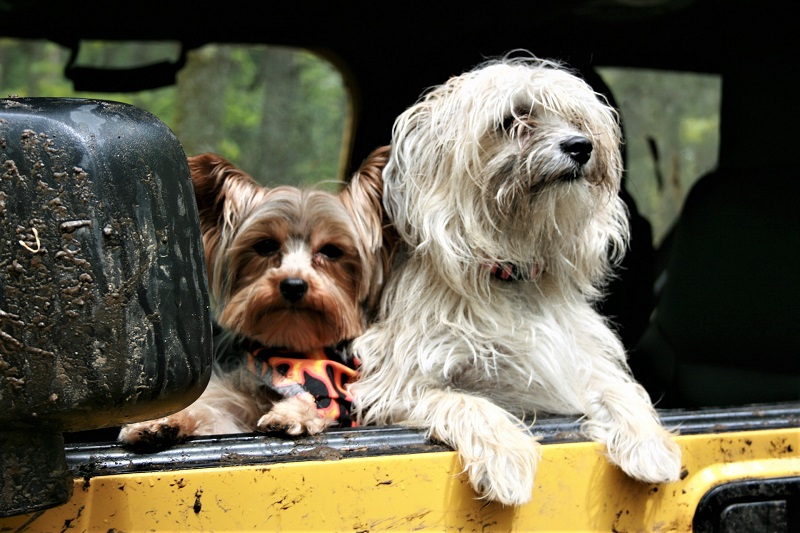 Cars to suit Your Double Coated Dog