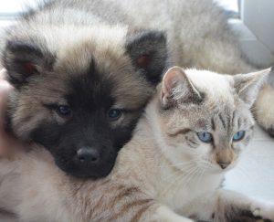 Dog and Kitten Friends
