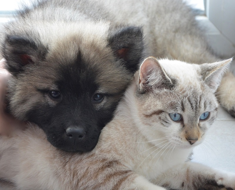 Dog and Kitten Friends