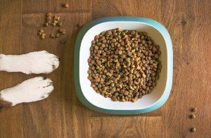 Dog Food Preservatives and Additives